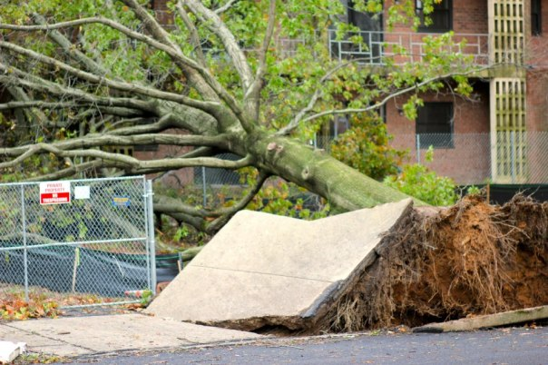 Some local damage after Sandy.  All photos by Evan Schneider.