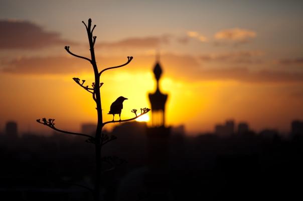 Sunset over Cairo.
