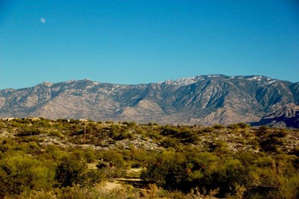 Sonora Desert, Arizona.