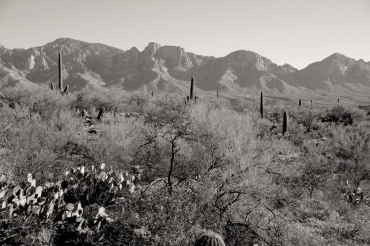 Sonoran Desert, Arizona.  All photos by Evan Schneider.
