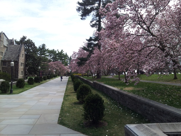 Spring on the Princeton campus.
