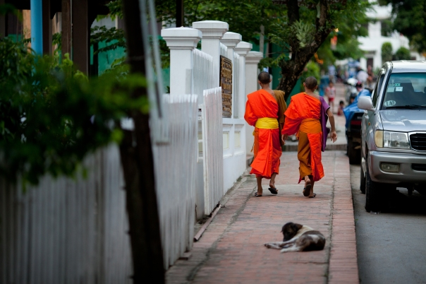 Young monks in Luang Prabang, Laos.  Photo by Ben Robinson.