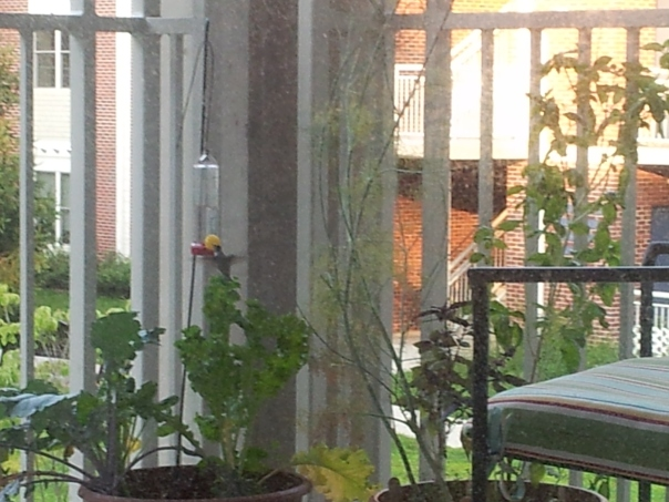 Fuzzy photo of the humming bird feeding on our porch.  My photo.