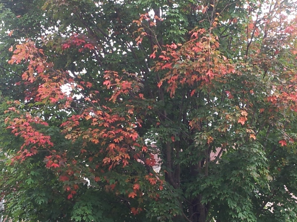 The first glimpses of fall in Princeton.  My photo.