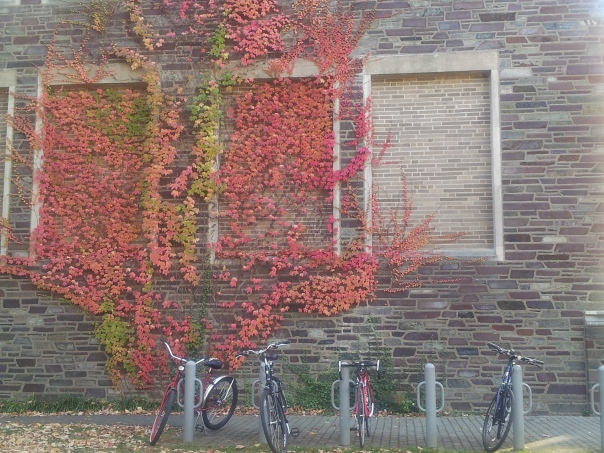 Bikes in front of fall vines at the university.  All photos are mine.