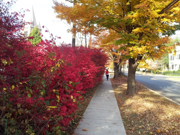 Brilliant fall colors in downtown Princeton.