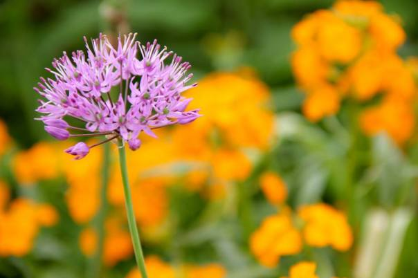 Flowers in Monet's Garden.  Photo by Evan Schneider.
