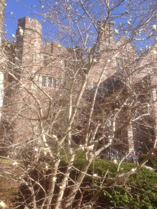 Spring on the university campus.  Iphone photo by the husband.