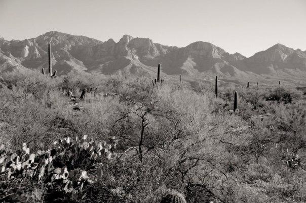 The Sonoran Desert.  Tucson, Arizona.  Photo by Evan Schneider.