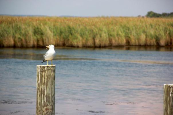 Chesapeake Bay.  Photo by Evan Schneider.