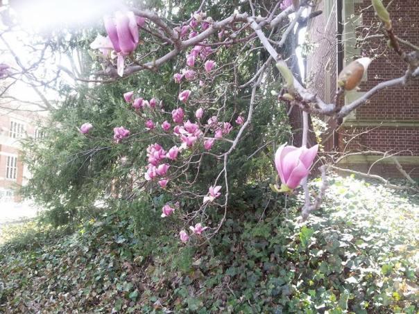 Spring on the Princeton University campus.