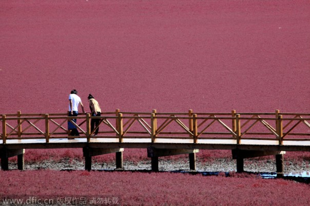 Red Beach, China.