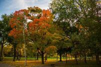 Washington, DC. Fall 2014. Photo by Evan Schneider.